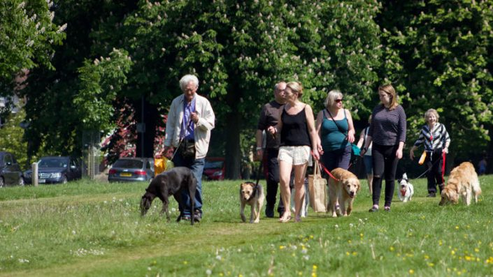 People walking dogs on the Downs in Bristol